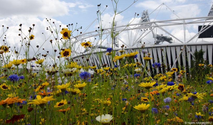 flowers-outside-olympic-stadium-copyright-ngaire-ackerley-2012