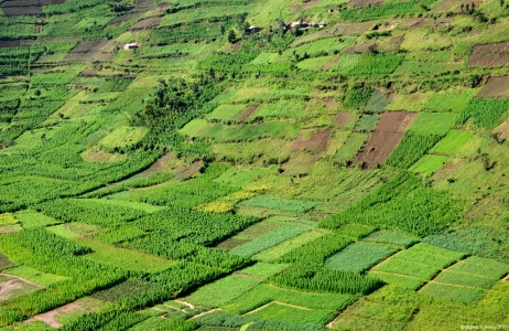 Countryside farms, Uganda.