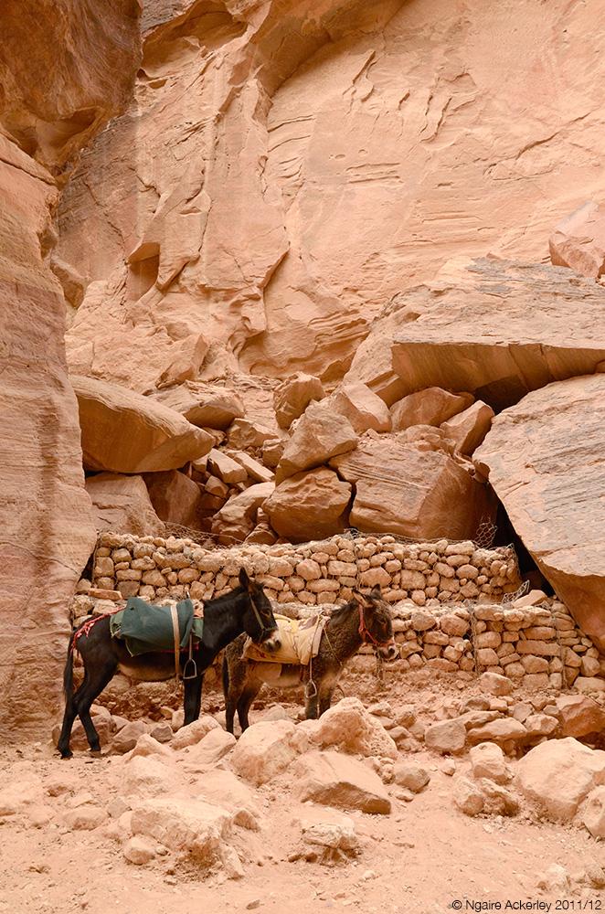 Donkeys, Petra, Jordan.