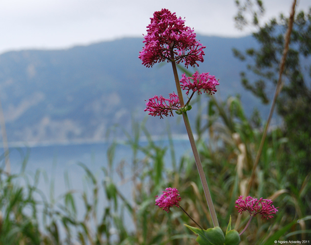 Flower on path, Cinque Terre, Italy.