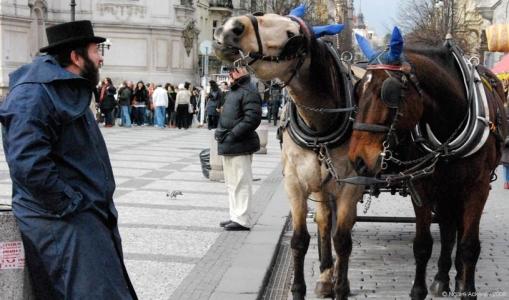 Horses by market, Prague, Czech Republic.