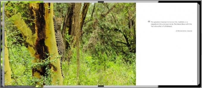 Footprints through East Africa - Kenya, leopard