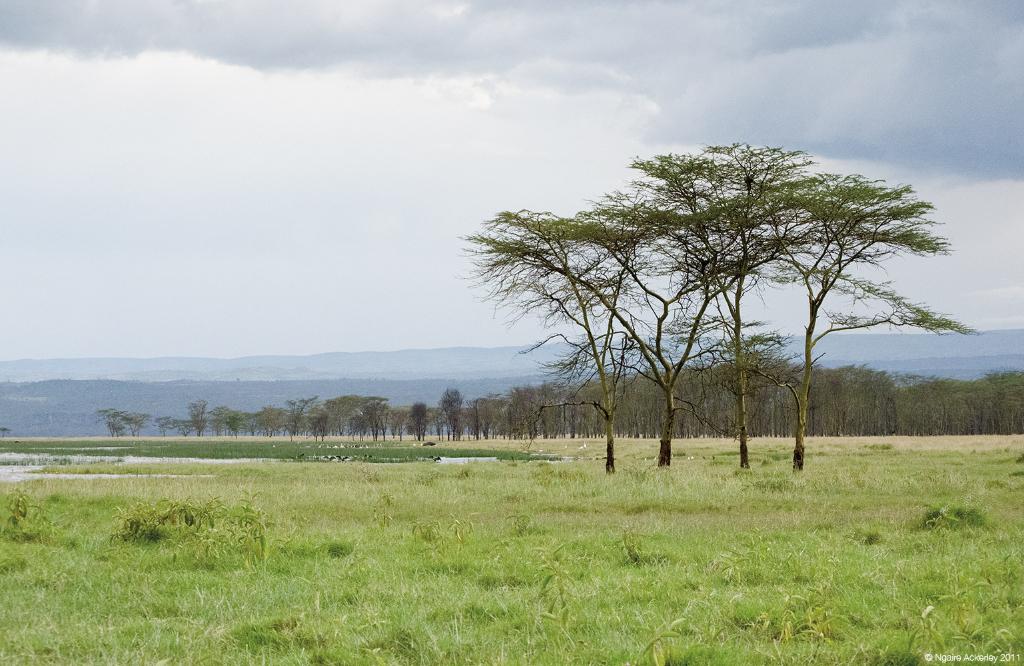 Lake Nakuru National Park, Kenya.