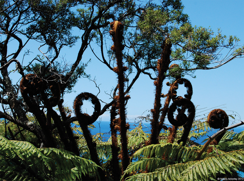 Ponga fronds, New Zealand