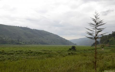 Rolling hills of Rwanda