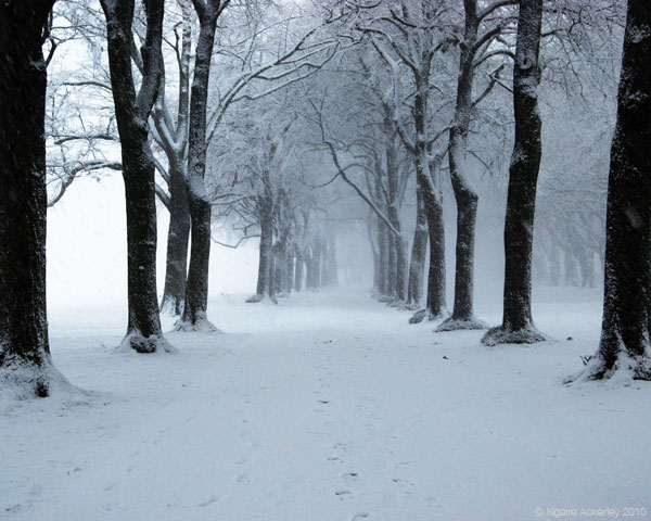 Snowy park, London, England.