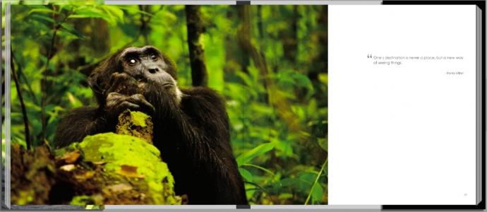 Footprints through East Africa - Uganda, chimpanzee